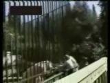 Нападение белого медведя на человека